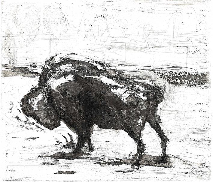 Brigitte Lingertat: Junger Büffel; Strichtzung und Aquatinta, 2002/2020